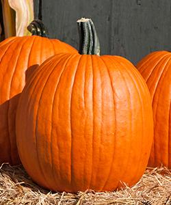 Cargo PMR (F1) Pumpkin
