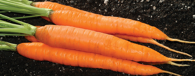 How to Grow Carrots - Four Keys