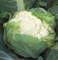 Bishop Cauliflower
