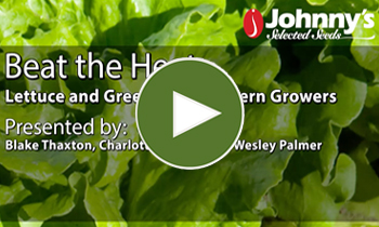 View Our Full Lettuce & Greens for Southern Growers Webinar Video