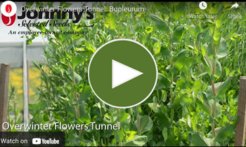 View Our Overwinter Flower Tunnel Bupleurum Video