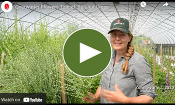 View Our Overwinter Flower Tunnel Persian Cress Video