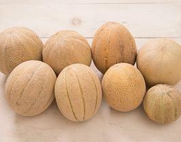 8 Cantaloupe Varieties