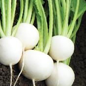 Hakurei Turnip