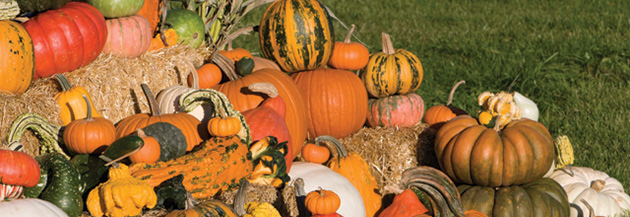 How to choose which squash & pumpkin varieties to grow