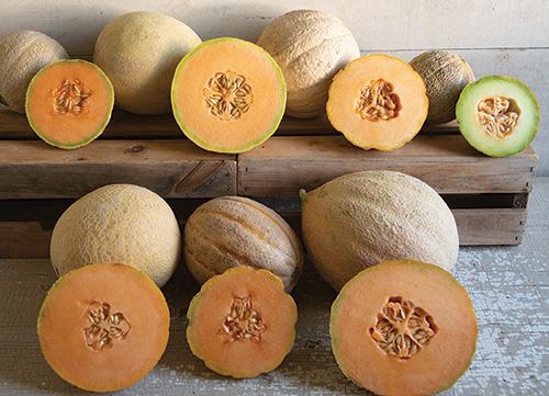7 Cantaloupe Varieties