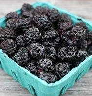 Jewel Raspberry Plants