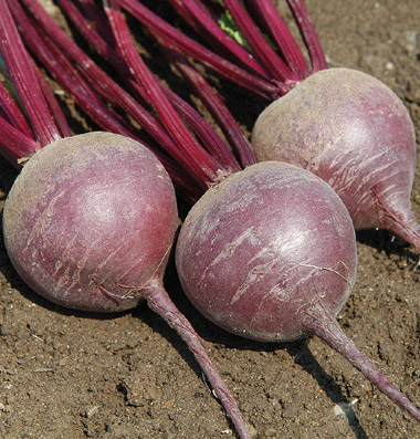 Merlin Organic Beet