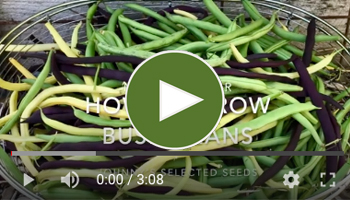 View Our How to Grow Bush Beans Video