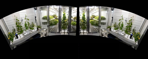 Changes to Greenhouse Crop Production, by Merle Jensen, PhD