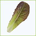Baby-Leaf Lettuce