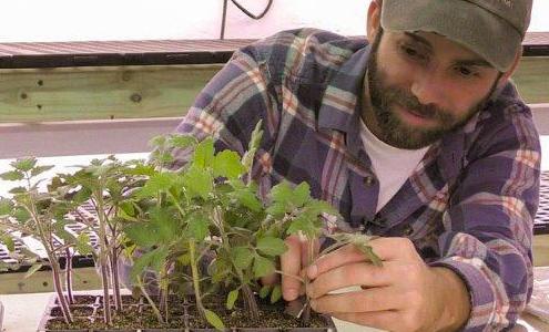 Fundamentals of Grafting Tomatoes