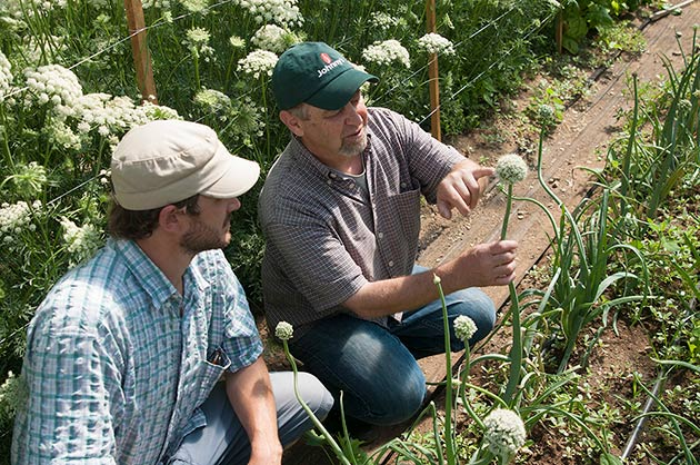 Plant breeder Dr. John Navazio shares observations on the onion trial at Johnny's.