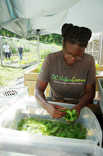Non-profit organization DC Urban Greens brings low-cost, fresh produce, including this baby leaf lettuce, to the city's food deserts.