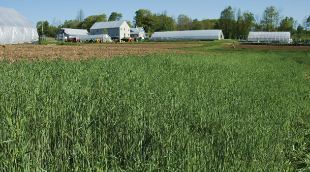 Uses and Benefits of Farm Seed