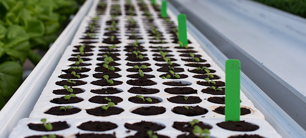 Hydroponic Seed-starting & Environmental Variables
