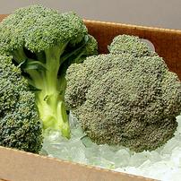 Standard Broccoli Planting Program