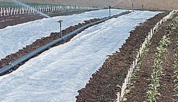 Protective Row Cover