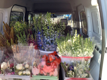Everything on my truck looks alive and fresh - Jeriann of Deadhead Cut Flowers.