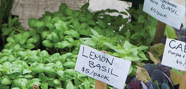Year-round demand for locally grown basil.