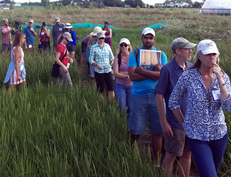 Participants fan out across the rice paddies at Wildfolk Farm