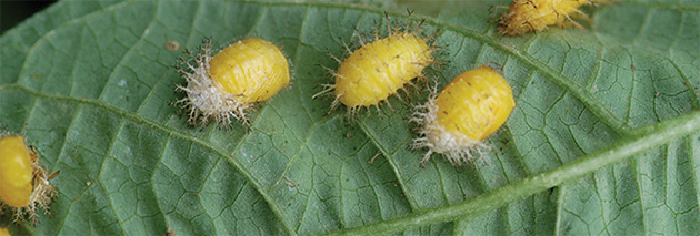 Rotate Crops & Controls to Prevent Resistance in Pests & Pathogens