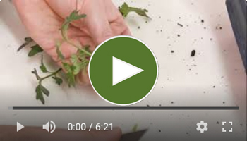 View Our Splice Grafting & Cleft Grafting Video