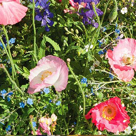 How to Grow Shade Flower Mix