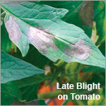 Rotate Controls for Early & Late Blight