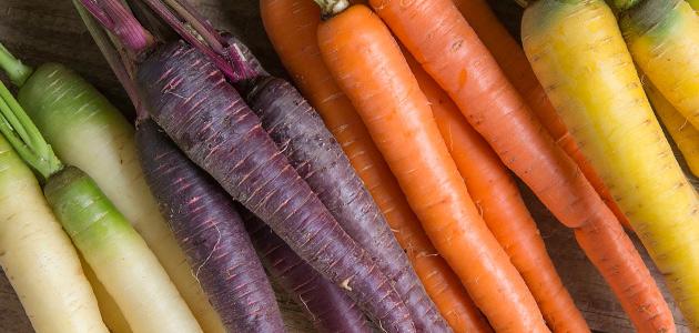 Multicolored Carrots at the Farmer's Market