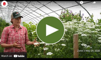 View Our Video on Economic Considerations for Overwinter Flower Production