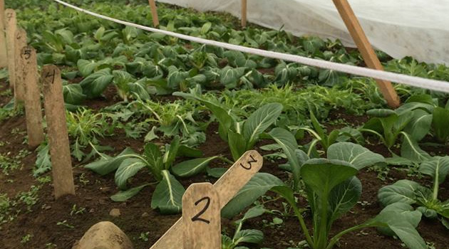 Scheduling your overwintering crops