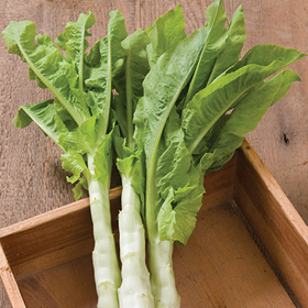 How to Grow Celtuce