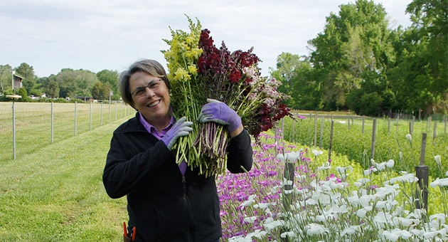 Lisa Mason Ziegler, on growing hardy cool-season annuals