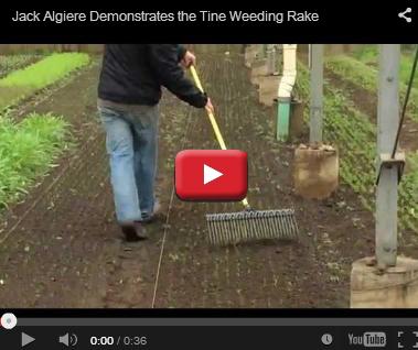 Jack Algiere - 21-inch Tine Weeding Rake