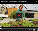 Video - Seeding Microgreens