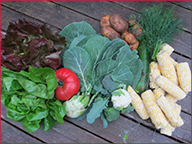 Farm to Table Dinner Harvest