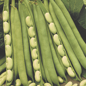 How to Grow Fresh Shell Beans