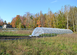 Cucurbits & brassicas in caterpillar tunnel