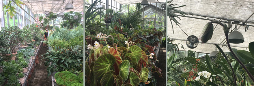 The glasshouse is home to Martha's collection of exotics - begonias, orchids, succulents, and staghorn ferns.