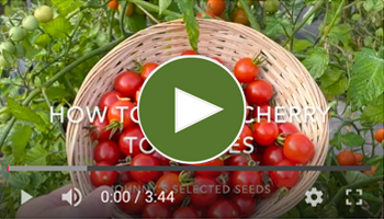 View Our How to Grow Cherry Tomatoes Video