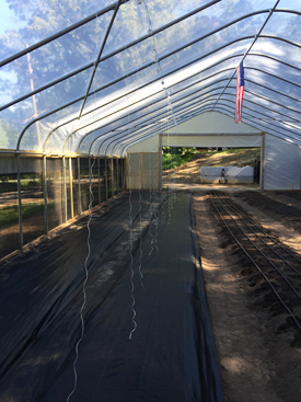 Raised beds in Jeff Scott's high tunnel, Vino, Alabama.