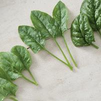 Spinach Planting Program