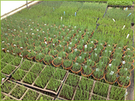 Seedlings, up and coming