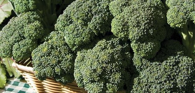 Johnny's Broccoli Planting Program