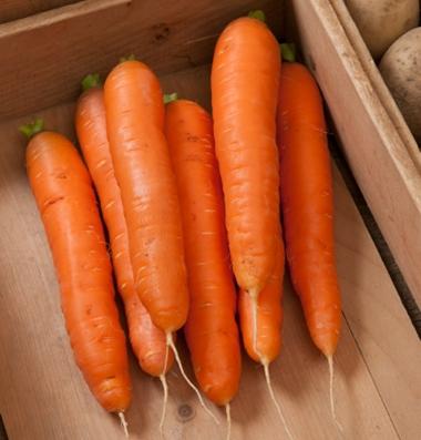 Bolero: Storage Carrot