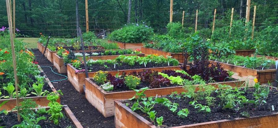 Niki Jabbour's Raised Bed Gardens