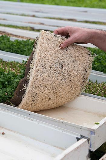 Coco coir hydroponic slab tray lining