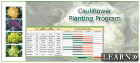 Cauliflower Planting Program for 10 Varieties in 4 Colors