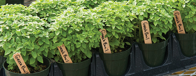 Learn How to Grow Professional Quality Container Herbs